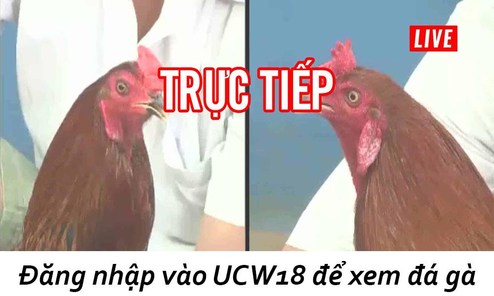 Đăng nhập vào UCW18 để xem đá gà