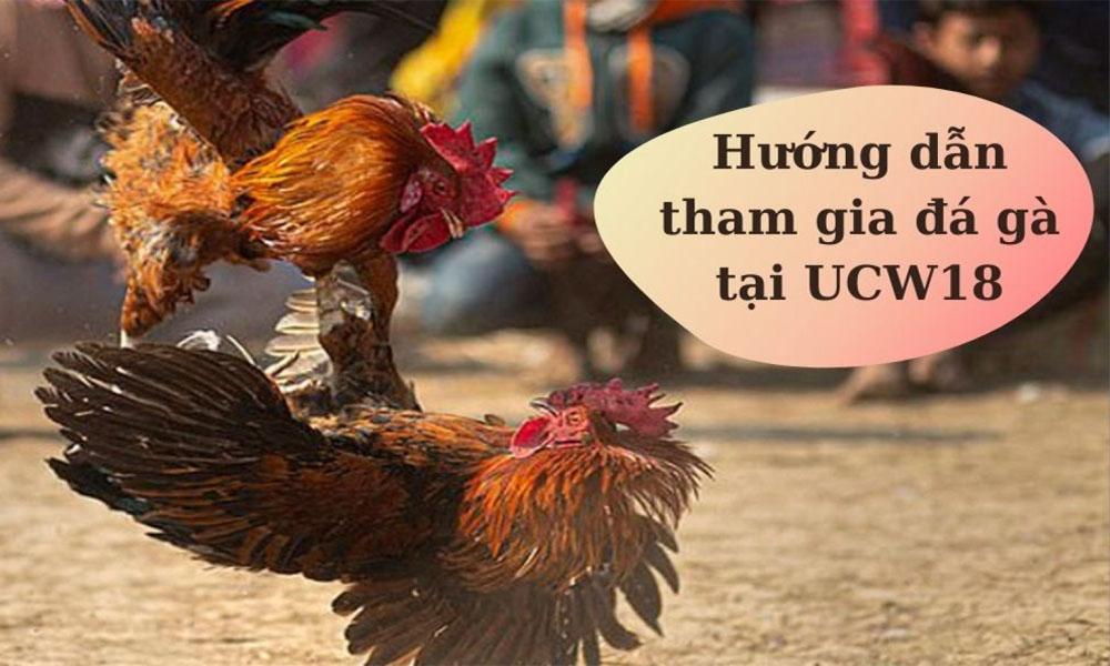 Hướng dẫn tham gia cá cược đá gà tại UCW18