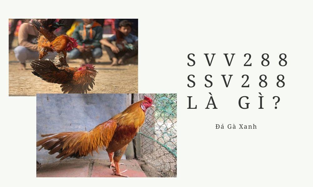 SVV288 SSV288 là gì?