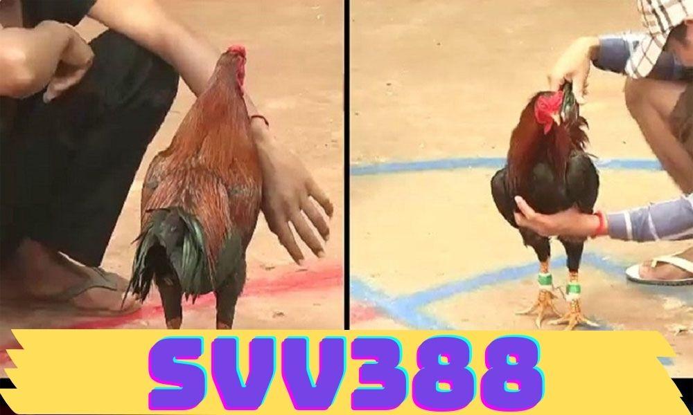 SVV388