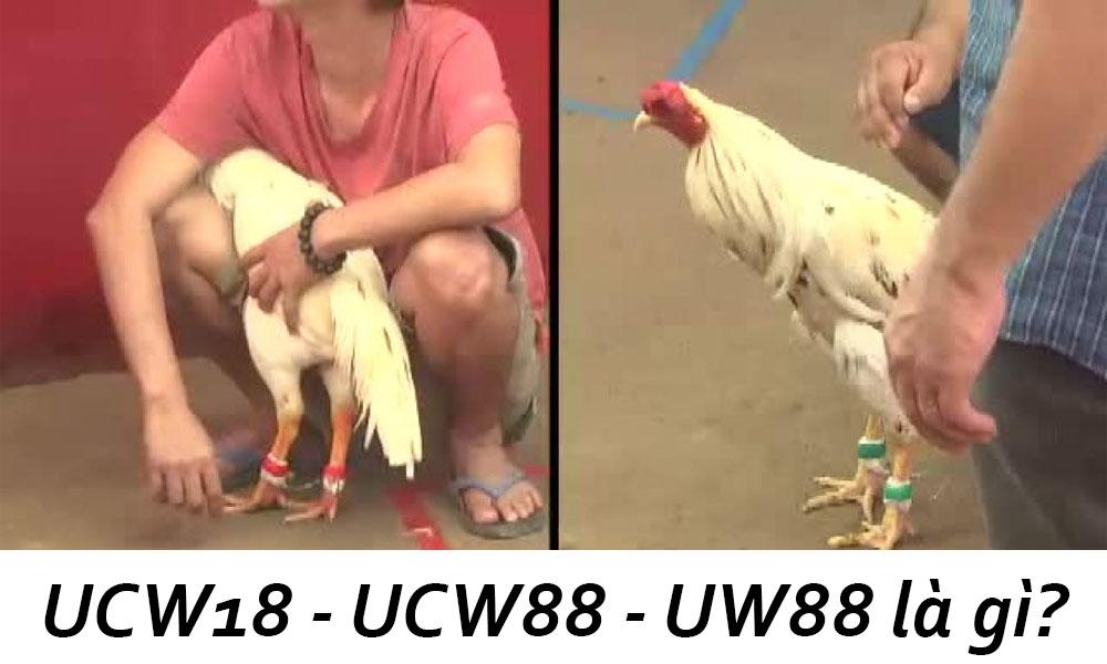 UCW18 - UCW88 - UW88 là gì?