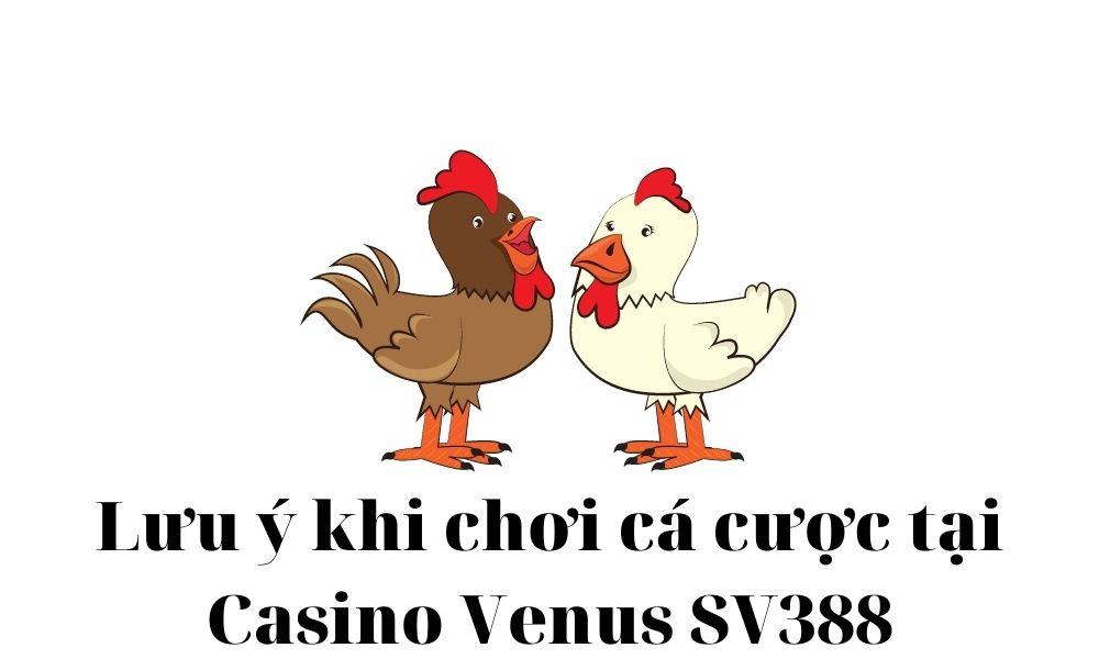 Lưu ý khi chơi cá cược tại casino Venus SV388