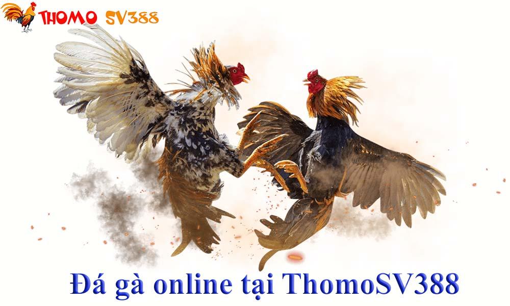 Nhà cái đá gà ThomoSV388