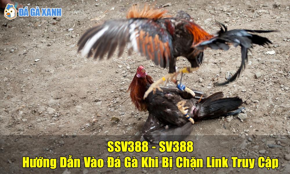 SSV388 - SV388 vào đá gà khi bị chặn link nhà cái